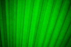Bakgrund för abstrakt begrepp för grön växt för sidor royaltyfri fotografi