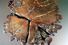 Bakgrund för abstrakt begrepp för Grungebrunttextur Fotografering för Bildbyråer
