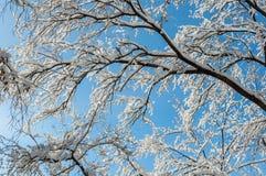 Bakgrund för abstrakt begrepp för snöfilialhimmel Arkivbilder