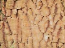 Bakgrund för abstrakt begrepp för textur för trädskäll Royaltyfri Fotografi