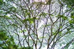Bakgrund för abstrakt begrepp för trädblad- och solljus Arkivbilder