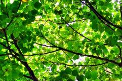 Bakgrund för abstrakt begrepp för trädblad- och solljus Arkivfoto