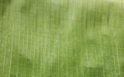 Bakgrund för abstrakt begrepp för närbildbanansidor randig naturlig Royaltyfria Foton