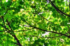 Bakgrund för abstrakt begrepp för trädblad- och solljus Royaltyfria Foton