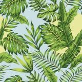 Bakgrund för blå himmel för djungel för solig dag Royaltyfri Foto