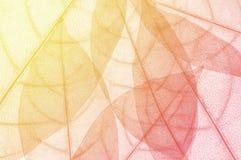 bakgrund för bladdesignabstrakt begrepp Arkivbild