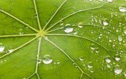 Bakgrund för bladvattensmå droppar Arkivbilder