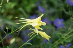 Bakgrund för blommafält arkivbild