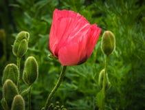 Bakgrund för blommafält royaltyfria bilder