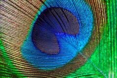 Bakgrund för closeup för abstrakt begrepp för påfågelfjäderöga Royaltyfria Foton