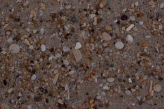 Bakgrund för Closeupsandtextur med fina korn och havsskal Arkivfoton