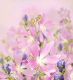 Bakgrund för designen med blommor, härlig bukett av blommor Arkivbilder