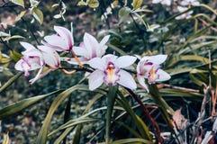 Bakgrund för detalj för trädfilial med orkidéblommor arkivbild