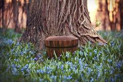 Bakgrund för Digitalt fotografi av den lantliga hinken i skog royaltyfri foto