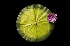 Bakgrund för Digitalt fotografi av isolerade Lily Pad arkivfoton