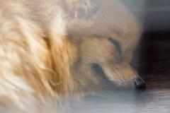 Bakgrund för djur för tappningstilabstrakt begrepp Royaltyfri Bild