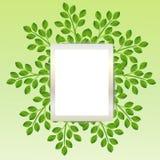 Bakgrund för en design med gröna filialer Royaltyfri Fotografi