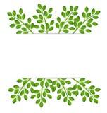 Bakgrund för en design med gröna filialer Royaltyfri Bild
