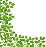 Bakgrund för en design med gröna filialer Arkivfoto