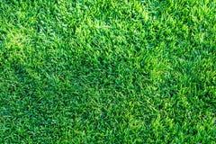 Bakgrund för fält för grönt gräs, textur, modell Royaltyfria Bilder