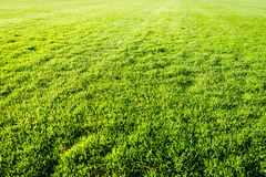 Bakgrund för fält för grönt gräs, textur, modell arkivbild