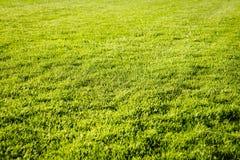 Bakgrund för fält för grönt gräs, textur, modell Arkivbilder