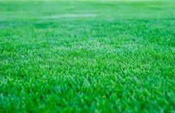 Bakgrund för fält för grönt gräs, textur, modell Fotografering för Bildbyråer