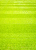 Bakgrund för fält för grönt gräs, textur, modell royaltyfria foton