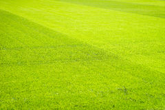 Bakgrund för fält för grönt gräs, textur, modell Arkivfoton