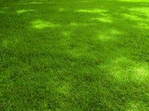Bakgrund för fält för grönt gräs, textur, modell Arkivfoto
