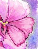 Bakgrund för förälskelse för rosa karmosinröd abstrakt blomma för vattenfärg romantisk Arkivbild
