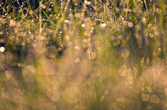 Bakgrund för gräs för suddighetssommar daggig Arkivfoton