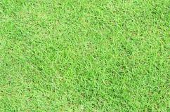 Bakgrund för grönt gräs Royaltyfria Bilder