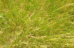 Bakgrund för grönt gräs. Arkivfoton