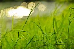 Bakgrund för grönt gräs Arkivfoto