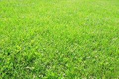 Bakgrund för grönt gräs Royaltyfri Foto