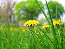 Bakgrund för grönt gräs Arkivbild