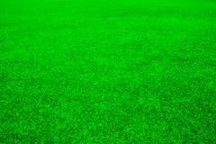 Bakgrund för grönt gräs Royaltyfri Fotografi