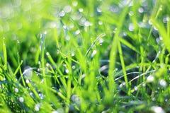 Bakgrund för grönt gräs - färgskärmsparare - färger i den härliga naturen Royaltyfria Bilder