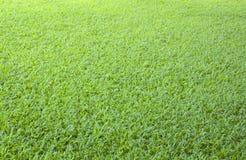 Bakgrund för grönt gräs för golf Arkivfoto