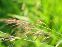Bakgrund för grönt gräs med den mjuka fokusen Arkivbild
