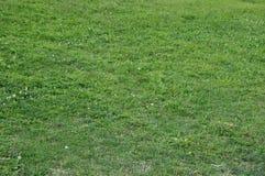 Bakgrund för grönt gräs med maskrosor royaltyfria bilder
