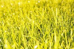 Bakgrund för grönt gräs, retro fotofilter Royaltyfria Bilder