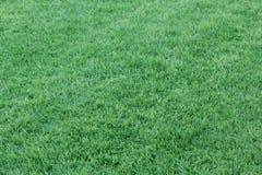 Bakgrund för grönt gräs - 1 SEPTEMBER 2017 Arkivfoto