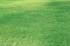 Bakgrund för grönt gräs - 1 SEPTEMBER 2017 royaltyfria bilder