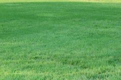 Bakgrund för grönt gräs - 1 SEPTEMBER 2017 Arkivfoton