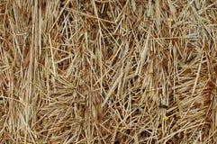 Bakgrund för hö och för torrt gräs Arkivfoton