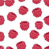 Bakgrund för hallonfruktvektor Arkivbilder