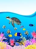 Bakgrund för havslivstid Arkivfoton