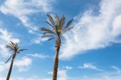 Bakgrund för himmel för två klar sommarblått för högväxta palmträd fotografering för bildbyråer